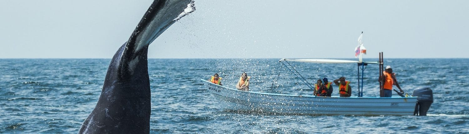 Whale watching from a tour boat in Riviera Nayarit Mexico