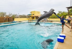 Training dolphins in Riviera Nayarit Mexico