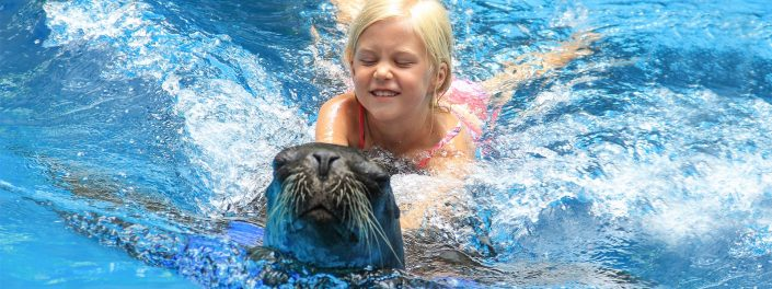 Young girl swimming with sea lion in Riviera Nayarit Mexico