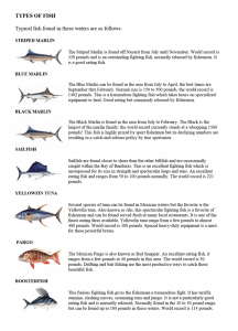 Types of Fish in Riviera Nayarit Mexico