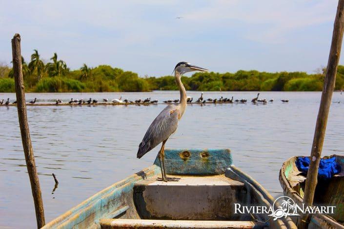 Boca de Camichín Santiago Riviera Nayarit Mexico - Heron standing on bow of boat
