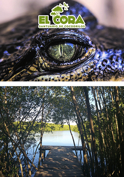 El Cora Santuary ad with crocodile eyes and wooden dock