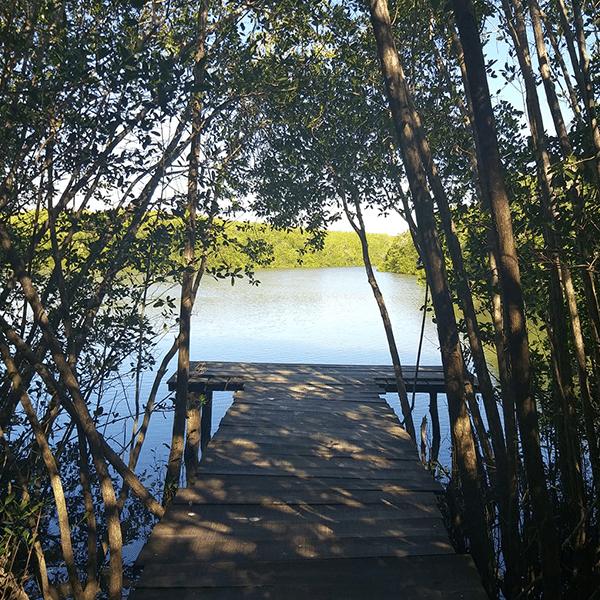 santuario-de-cocodrilos-el-cora-riviera-nayarit